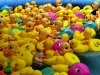 Lots of rubber ducks, floating in a kiddie pool at a carnival